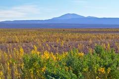 在日落光的美丽的茂盛的色的草与mountai 免版税库存照片