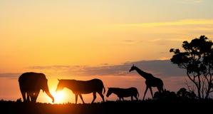 在日落光的自然徒步旅行队风景  混合画法 库存图片
