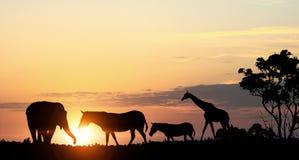 在日落光的自然徒步旅行队风景  混合画法 免版税图库摄影