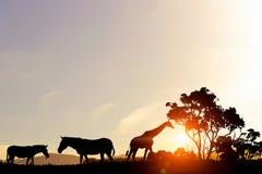在日落光的自然徒步旅行队风景  免版税库存图片