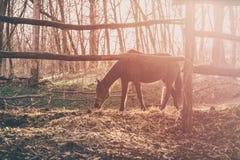 在日落光芒的马  免版税库存照片