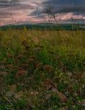 在日落前的一个黑暗的晚上领域风景 库存图片