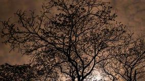 在日落前的一棵树 免版税图库摄影