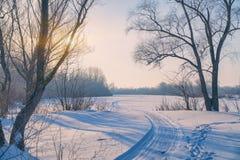 在日落前的太阳在树分支在冷淡的天空中 免版税库存照片
