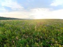 在日落前的开花的草甸 库存照片