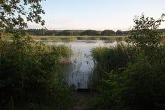 在日落前的时间在池塘 免版税图库摄影