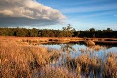 在日落前的狂放的沼泽湖 库存图片