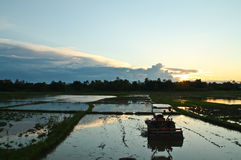 在日落前的玉米田 库存照片