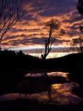 在日落前面的树 免版税库存照片