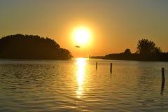 在日落前面的鸟飞行 免版税库存照片