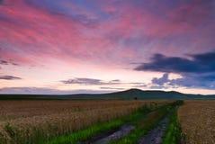 在日落和庄稼领域的红色云彩 库存照片