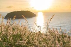 在日落和海下的禾本科 库存图片