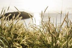 在日落和海下的禾本科 库存照片