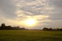在日落天空的平安的米领域 库存图片