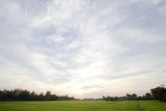 在日落天空的平安的米领域 免版税图库摄影