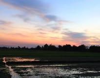 在日落天空的平安的米领域 免版税库存图片
