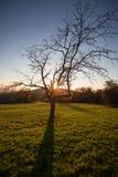 在日落天空的树 免版税库存照片