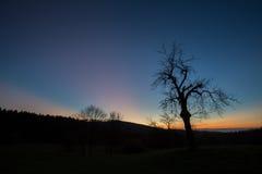 在日落天空的树 免版税库存图片