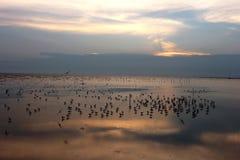 在日落天空的海鸥飞行在bangpoo samutprakarn精选的焦点 库存照片