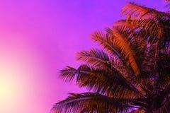 在日落天空背景的棕榈树冠 意想不到的红色天空和棕榈叶定了调子照片 库存照片