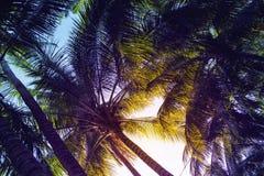 在日落天空背景的热带棕榈叶 热带自然五颜六色的阳光定了调子照片 免版税库存照片