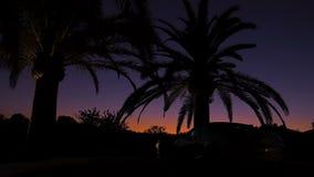 在日落天空背景的黑棕榈树剪影  日落的宏伟的视图在橙色和紫罗兰色的 股票录像