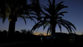 在日落天空背景的黑棕榈树剪影  日落的宏伟的视图在黄色和蓝色的 股票录像