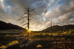 在日落天空背景的死的树 库存图片