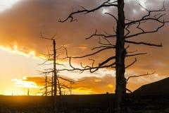 在日落天空背景的死的树 免版税库存照片