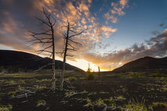在日落天空背景的死的树 免版税库存图片