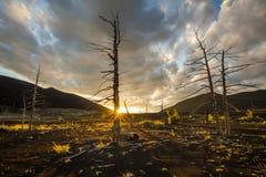 在日落天空背景的死的树 库存照片