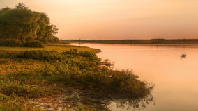 在日落天鹅的镇静金黄湖 图库摄影