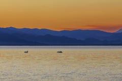 在日落少年游泳的两只天鹅在湖 免版税库存照片