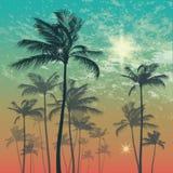 在日落或日出的异乎寻常的热带棕榈树 也corel凹道例证向量 库存照片