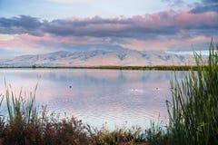 在日落报道的使命峰顶在南旧金山湾,森尼韦尔,加利福尼亚池塘上色了云彩反映  图库摄影