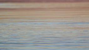 在日落时间的美好的水表面 股票录像