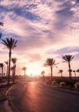 在日落时间的风景 去在棕榈和灌木中的柏油路与花 库存图片