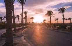 在日落时间的风景 去在棕榈和灌木中的柏油路与花 免版税库存图片