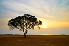 在日落时间的玉树在湖 免版税库存图片