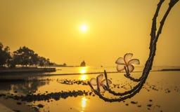 在日落时间的羽毛花在海滩 库存照片