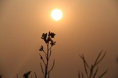 在日落时间的花阴影 库存图片