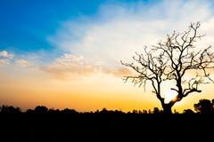 在日落期间的偏僻的死的树世界地球日概念的 图库摄影