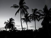 在日落期间的剪影椰子 黑白概念 库存照片