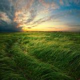 在日落期间的洪水草甸 库存图片