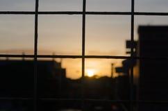 在日落期间的特写镜头篱芭 免版税库存照片