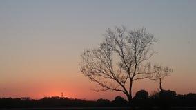 在日落期间的秋天树 免版税库存图片