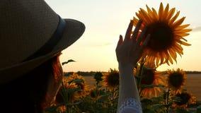 在日落期间,少妇` s手接触在领域,特写镜头的向日葵帽子 股票录像