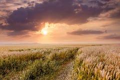 在日落期间,路是在麦田中 日出 免版税图库摄影