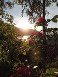 在日落期间的一个庭院 免版税图库摄影