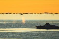 在日落期间的一个驼背鲸喷口 库存照片